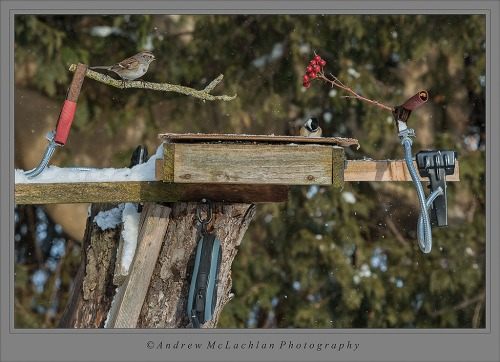 Winter Feeder_4242