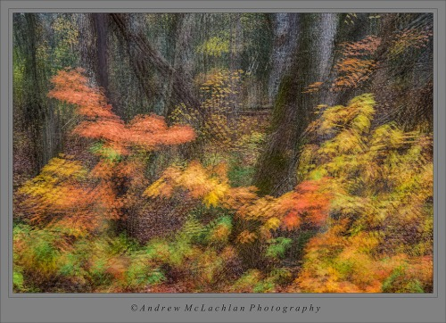 6 Image Multiple Exposure of Autumn Forest Scene. Parry Sound, Ontario