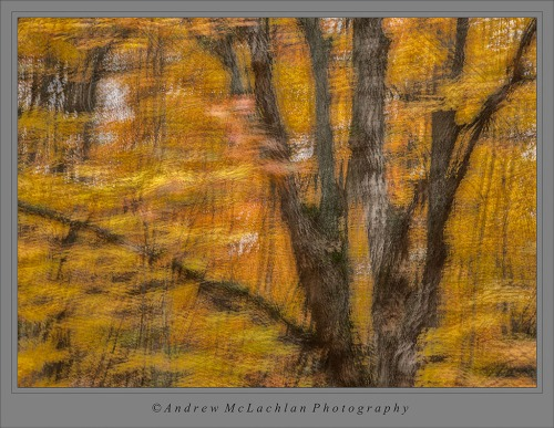 6 Image Multiple Exposure in Sugar Maple Forest. Parry Sound, Ontario.
