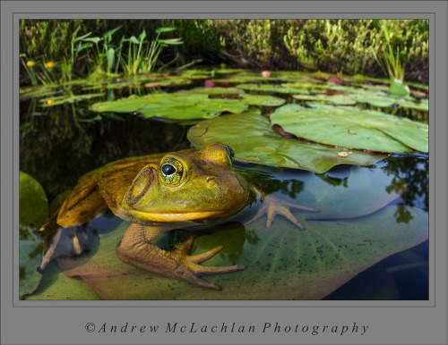 Bullfrog-scape with the Sigma 15mm Fisheye Lens