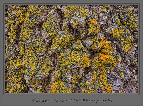 Lichens on Tree Trunk - Sony RX100