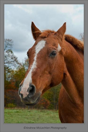 Horse_8827