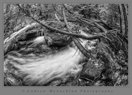 Skeleton River in Black & White, Muskoka, Ontario