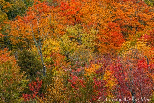 Autumn color, Parry Sound, Ontario Nikon D800, Nikon 200-500mm Lens @ 500mm ISO 800, f11 @ 1/160 sec. Handheld