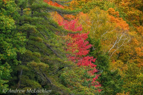 Autumn Colour, Parry Sound, Ontario Nikon D800, Nikon 200-55mm VR Lens @ 500mm ISO 800, f11 @ 1/100 sec Handheld from canoe