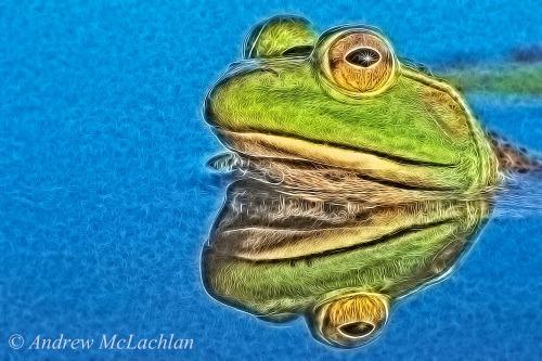 Bullfrog (Rana catesbeiana) Topaz Labs Glow - Heavy Metal Preset