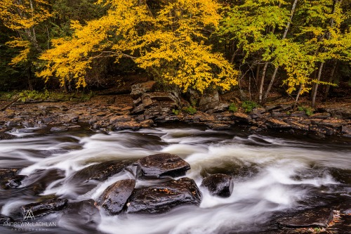 Oxtongue River_6440