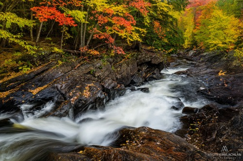 Oxtongue River_6444